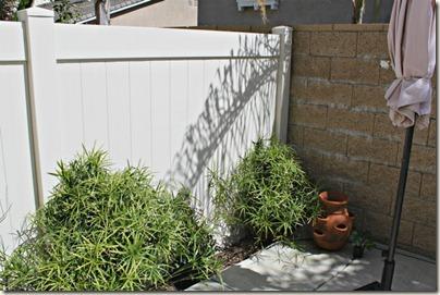 Vertical Gardening_13