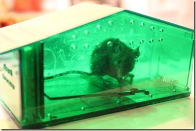 Humane Mouse Trap_1
